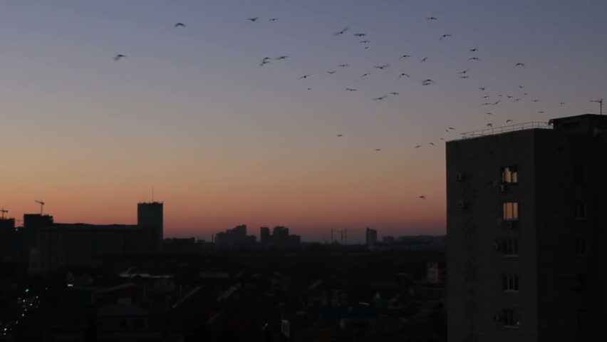 Birds above town apartment building at background twilight sky - HD stock footage clip
