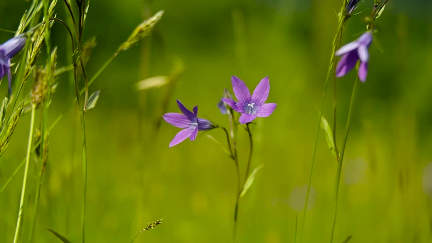 Beautiful wild flowers among green grass