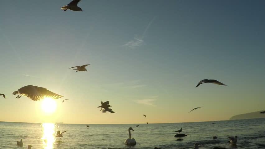 description aerial flying birds - photo #3