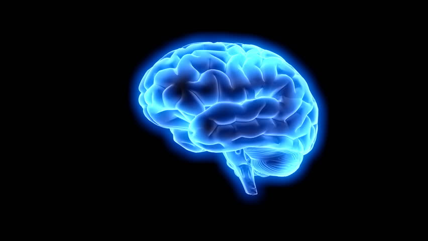 Animated human brain - photo#46