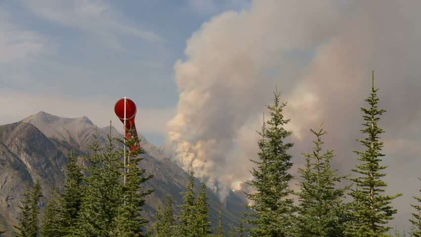 forest fire thru trees spectacular - HD stock video clip