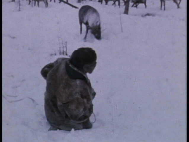 RUSSIA - CIRCA 1970:An old Eskimo ropes a reindeer in Russia circa 1970