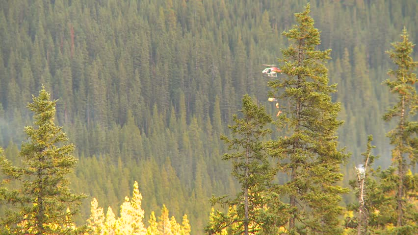 Mountain forest fire, Mt Buller #104, helicopter torching - HD stock footage clip