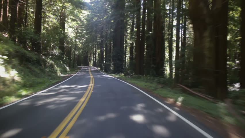 Driving along a road through an Oregon forest