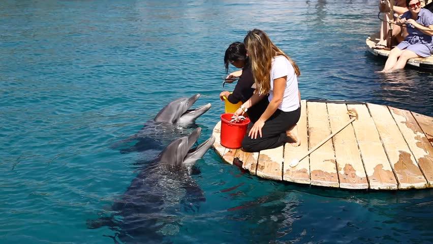 EILAT, ISRAEL - CIRCA FEB 2011: Dolphins are fed at a resort circa February 2011 in Eilat.