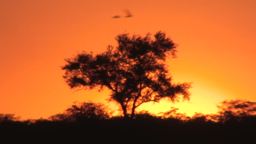 Clip 1769525 Stock Footage Acacia Tree Silhouette And African Sunset