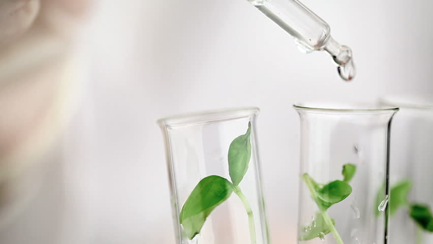 Researcher drops fluid into test tube with plant specimen