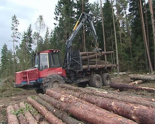 Special cargo truck with crane unload logs from truck. Forest fell.