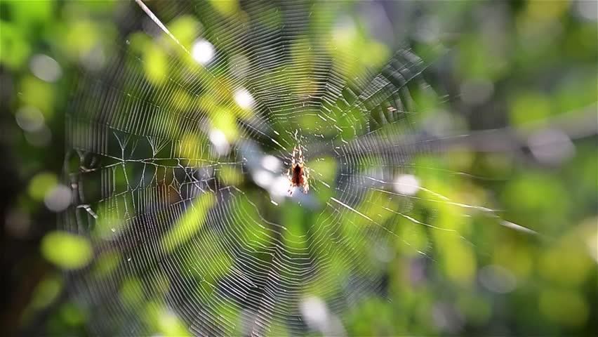 Header of Araneae