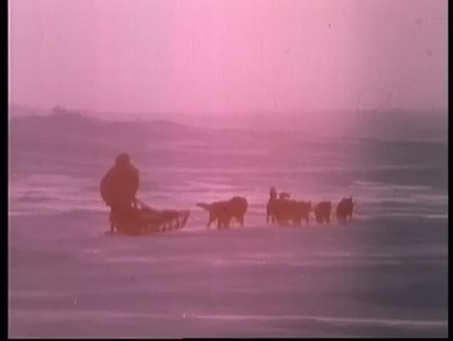 Rear view of eskimo pulled by sled dogs riding into the  sunset