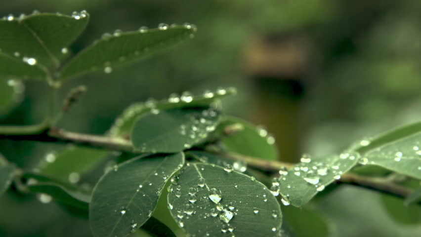 droplets on leaves 4k - photo #15