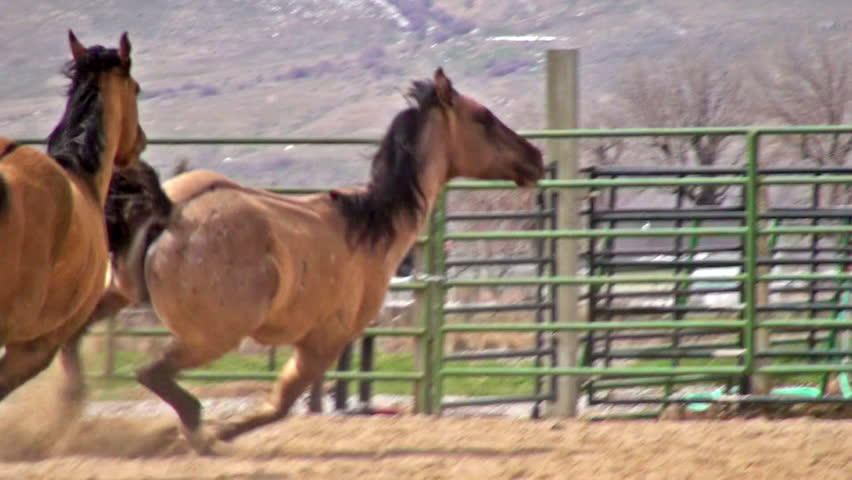 related pictures running horse - photo #16