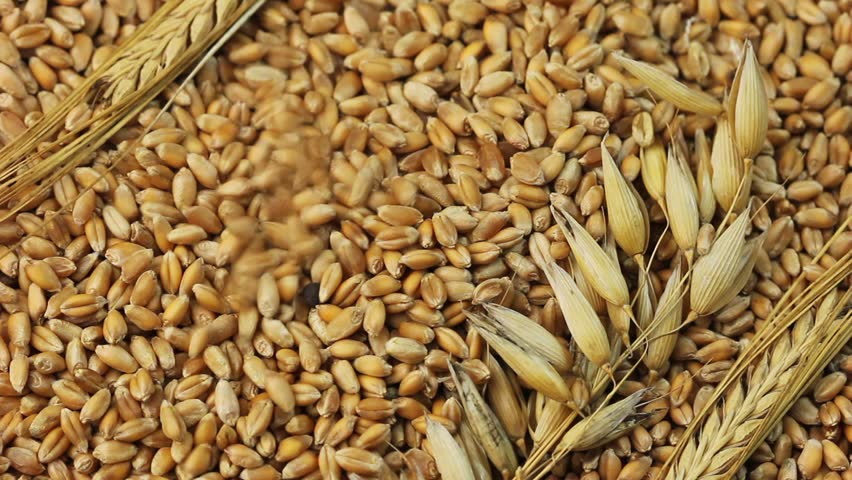 Falling grains of wheat