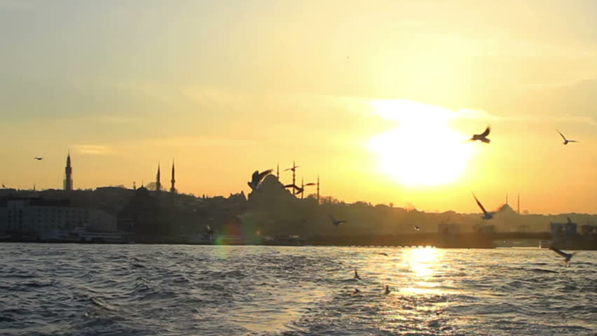 Flock of seagulls following the ship in Istanbul Harbor