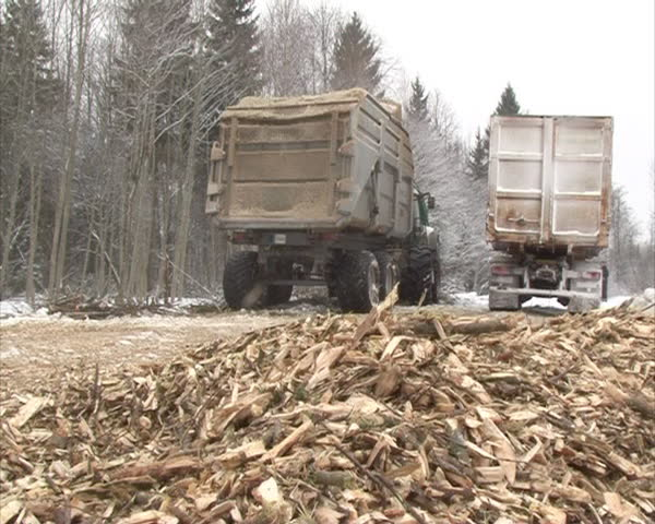 organic biofuel wood branches chips sawdust. solid fuel for boiler burning in cold season. cargo trucks.