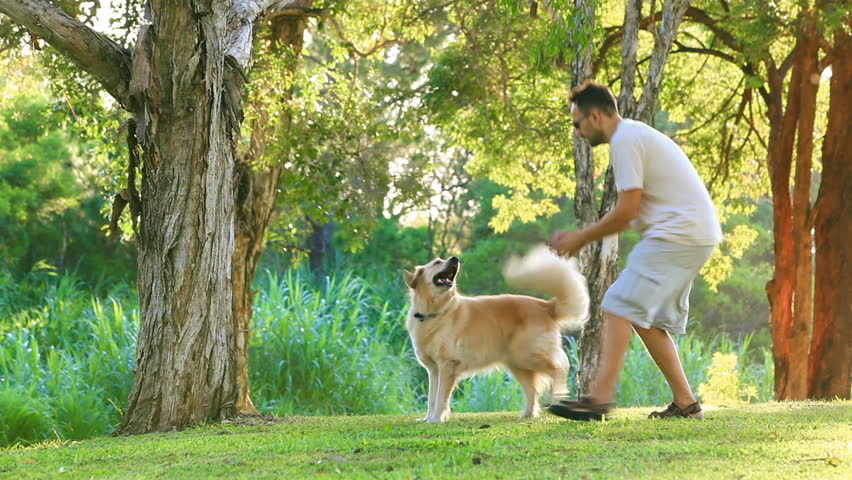 Dog having fun and fetching a stick in the park - HD stock footage clip
