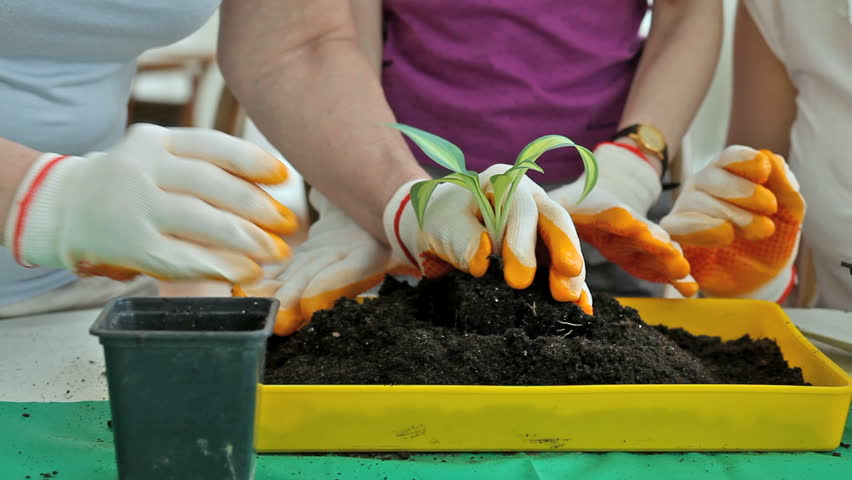 Close-up of plant replanting into a container full of soil