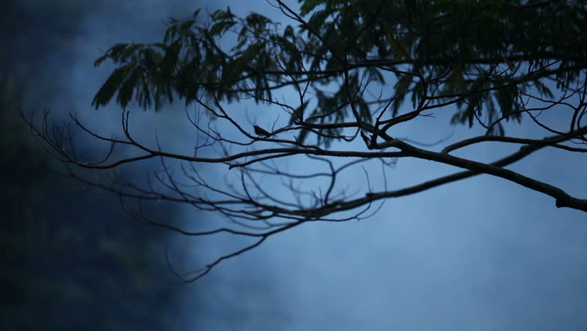 Bird flies from tree in the fog at night