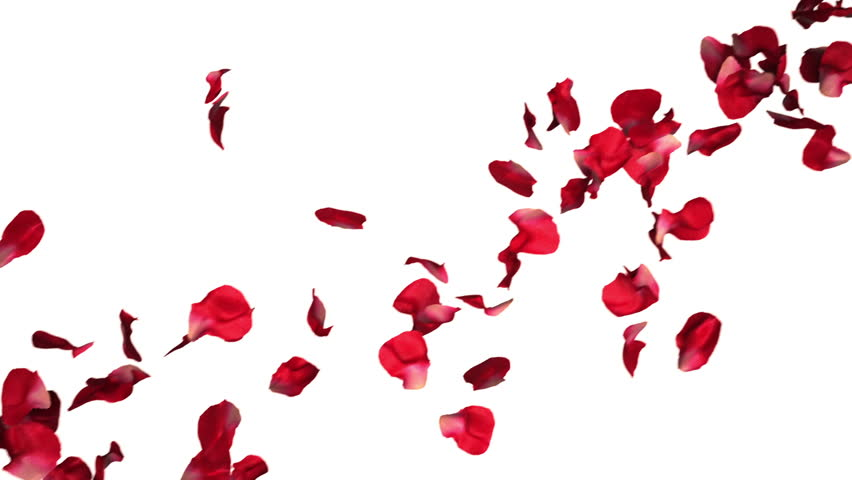 High Definition Seamless Background Animation Of Flowers ... Petals Falling From A Flower
