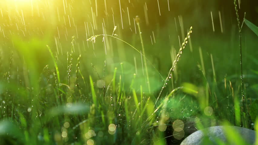 dew drops in lights on green grass. 