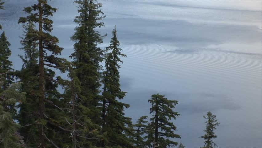 trees summer alaska - photo #20