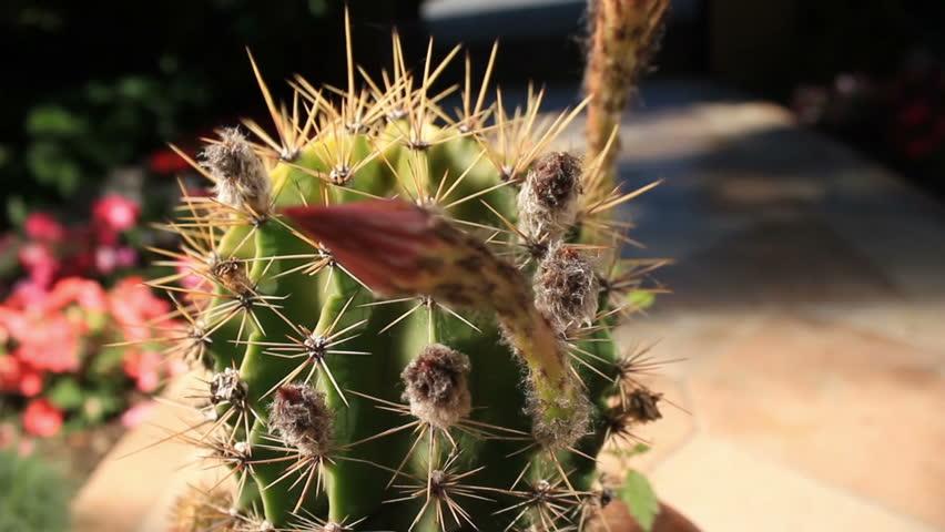 Cactus outdoor camera movement 03