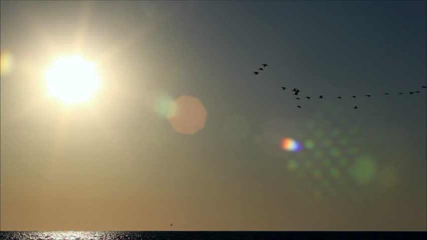 Flock of birds flying in the sun   Shutterstock HD Video #2461646