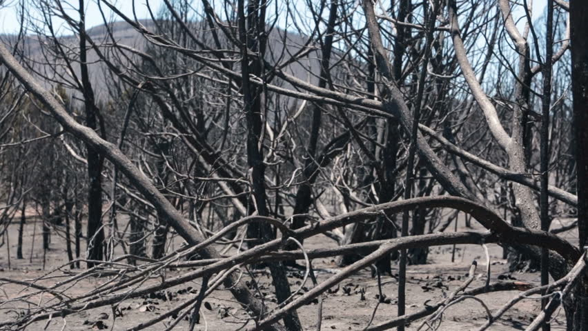 Dead trees from mountain forest fire. Blaze destroyed dozens of home, mountain, and caused death. Wood Hollow central Utah. FEMA Federal Government assistance. Drought with strong summer winds.  - HD stock video clip