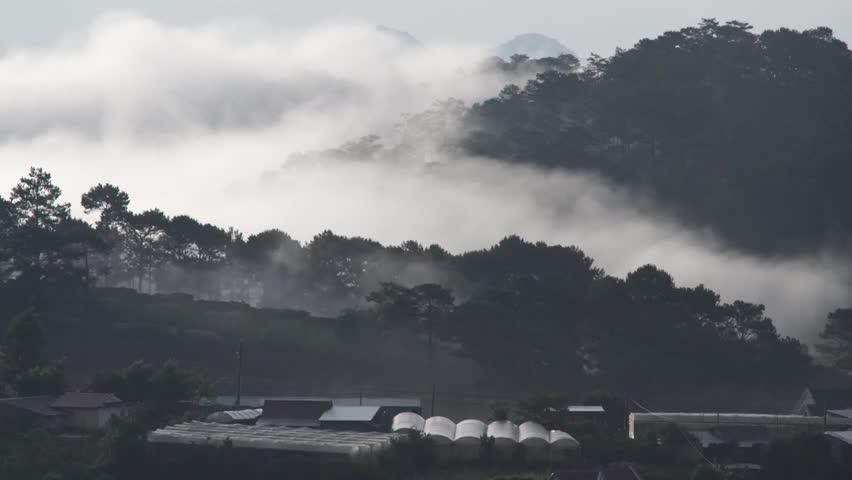 DA LAT, VIETNAM, Sep 23, 2015: pine forest, highland Da Lat city fog in the morning | Shutterstock HD Video #25001759