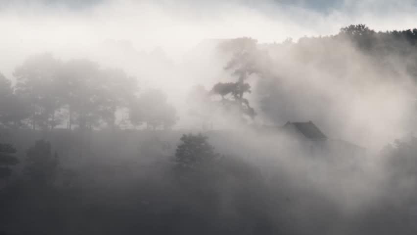 DA LAT, VIETNAM, Sep 23, 2015: pine forest, highland Da Lat city fog in the morning | Shutterstock HD Video #25001768
