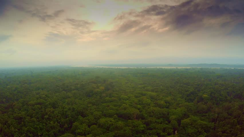 Aerial Shot Of Amazon Rainforest - Cloudscape  | Shutterstock HD Video #25029119