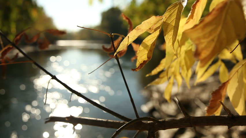 Reflected light from the Boise River shines on golden yellow autumn foliage. - HD stock footage clip