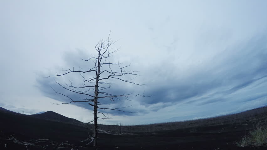 Single Tree Growing Time lapse with wind Animation. A lonely tree, clouds fly by. Wild nature. Night falls and it begins to rain. Floating clouds, young trees in the forest. timelapse | Shutterstock HD Video #25180112