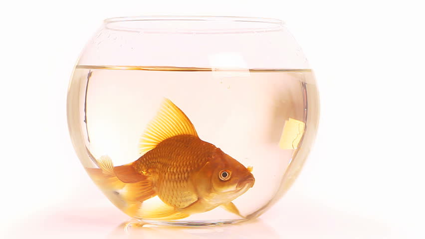 how to clean a fish bowl for goldfish