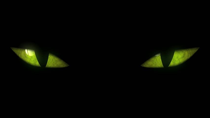 Cat Blinking Gif