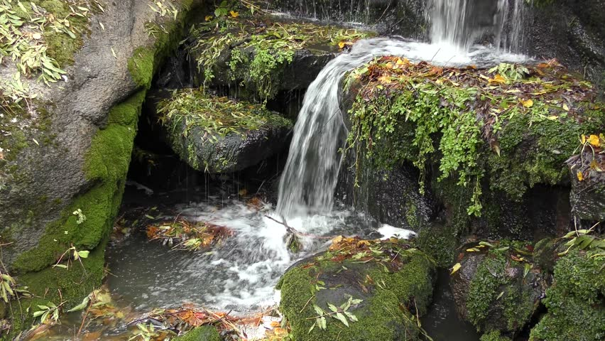 A forest stream with a small waterfall.   Shutterstock HD Video #26171129