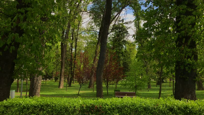 Beautiful park on a sunny day | Shutterstock HD Video #26230124