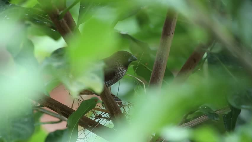 Couple of small birds building nest on the top tree, footage | Shutterstock HD Video #26417063