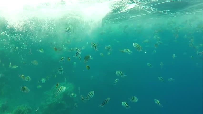 School of the Fish Floating in the Red Sea Under Coral Reef in Slow Motion. the Action Undersea. | Shutterstock HD Video #26599412
