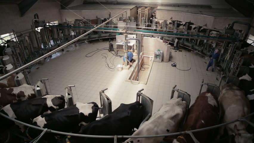 Automated Dairy Farm