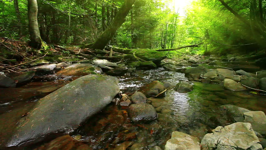 mountain stream in the forest - HD stock video clip