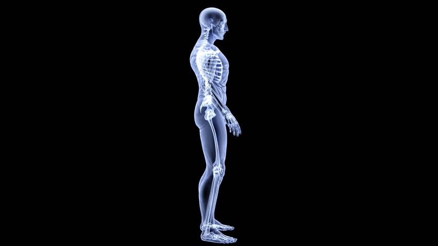 male body under X-rays. isolated on black. camera circled around - HD stock footage clip