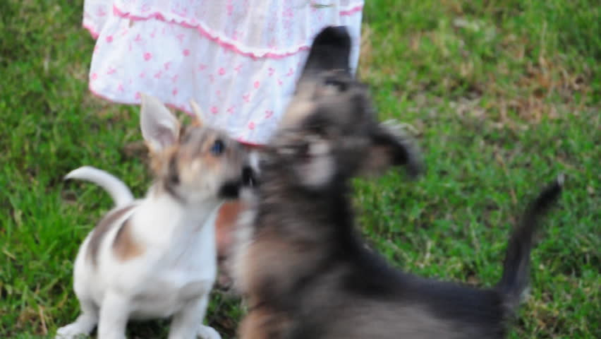 child playing with puppies outdoor - HD stock footage clip