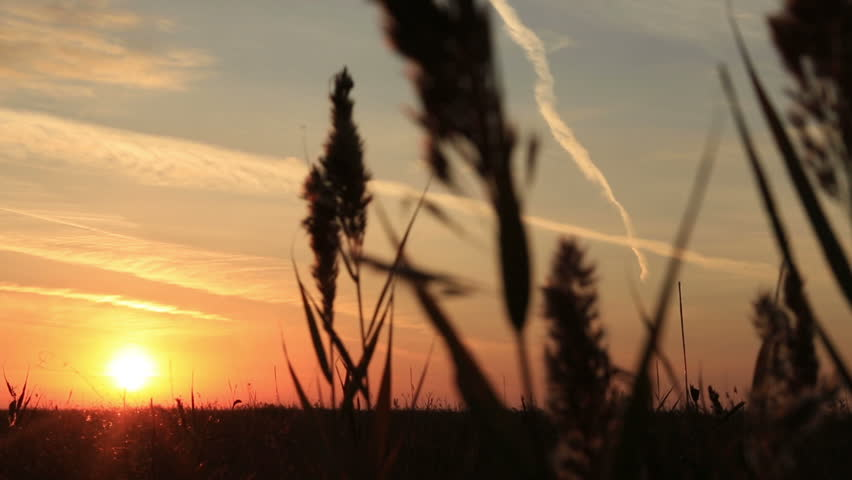 Dawn in a field with grass