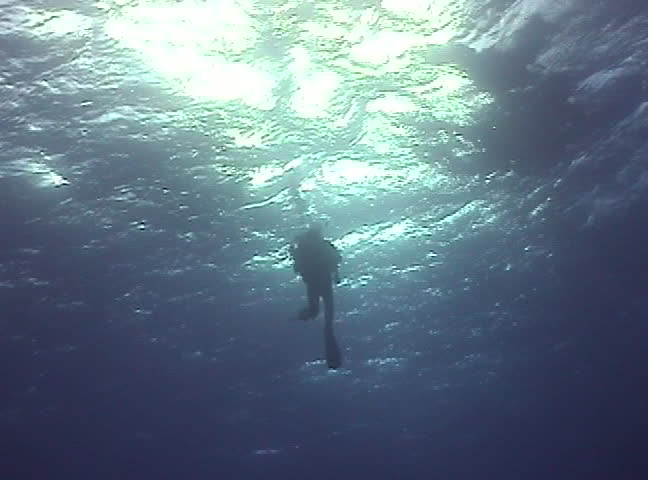 Underwater in the Red Sea - SD stock footage clip