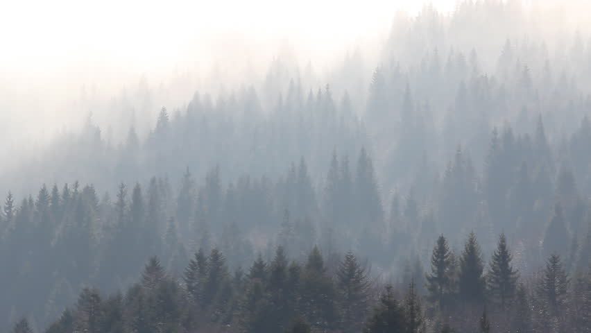 Fog timelapse over the mountain forest - HD stock footage clip