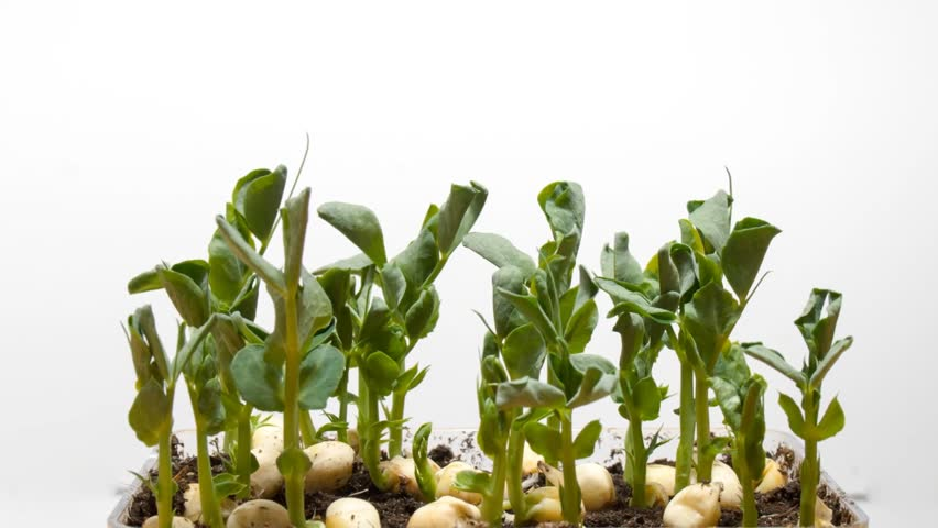 Timelapse photography of plant growth