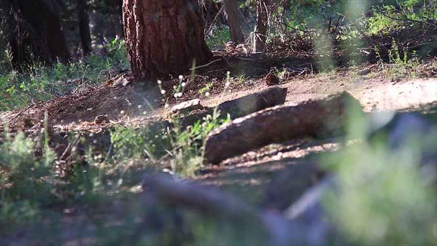 Close up of a mountain bike tire riding past and kicking up a cloud of dirt filmed at the Lake Tahoe National Park in HD