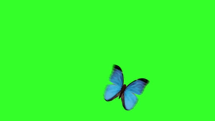 cartoon butterflies on a green background
