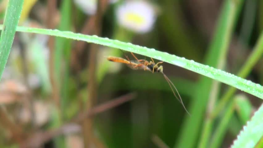 bug sits on a blade of grass and moved mustache - HD stock video clip
